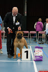 20130510-Bullmastiff-Worldcup-0537.jpg