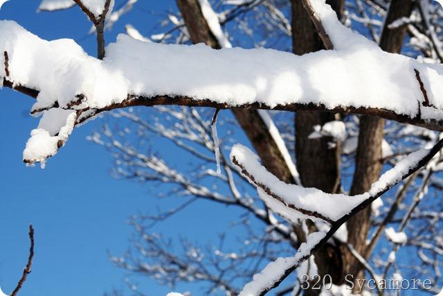 february 2012 039 1