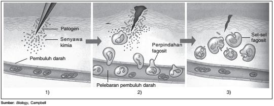 Mekanisme inflamasi