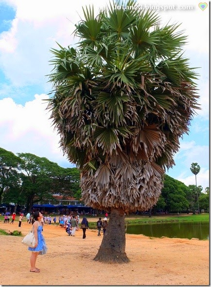 angkor-wat-siem-reap-cambodia-jotan23 (13)