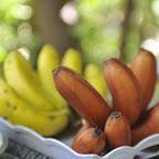 Mto Wa Mbu, frisch gepflücke Bananen © Foto: Svenja Penzel | Outback Africa