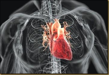 A hírtelen szívhalál_002