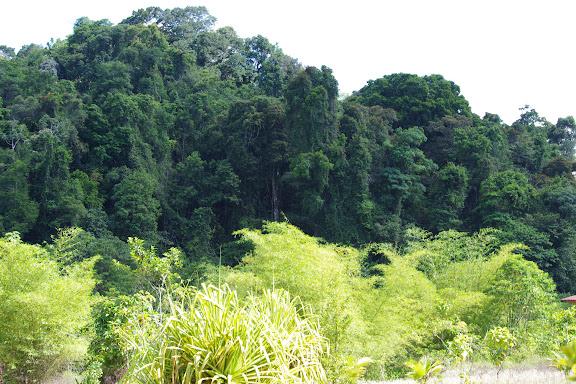 Reforestation devant les Carbets de Coralie (Petit Yaoni), 29 octobre 2012. Photo : J.-M. Gayman
