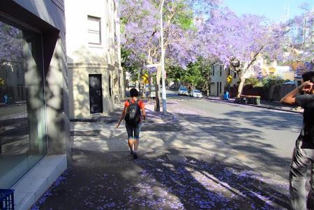 Imagini Australia: Sydney La plimbare pe stradute