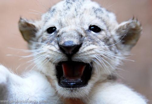 animais recem nascidos filhotes fofos desbaratinando (10)