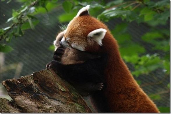 funny-animals-cute-6