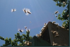 bees in flight 4