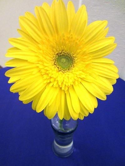 yellow gerber | Ideas in Bloom