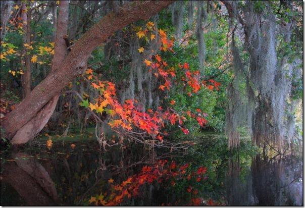 Lindas imagens de folhas do outono (9)