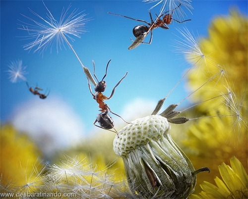 formigas inacreditaveis incriveis desbaratinando  (49)