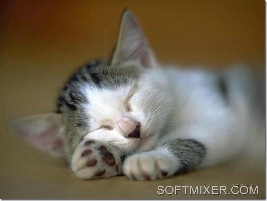 slp_cats_43