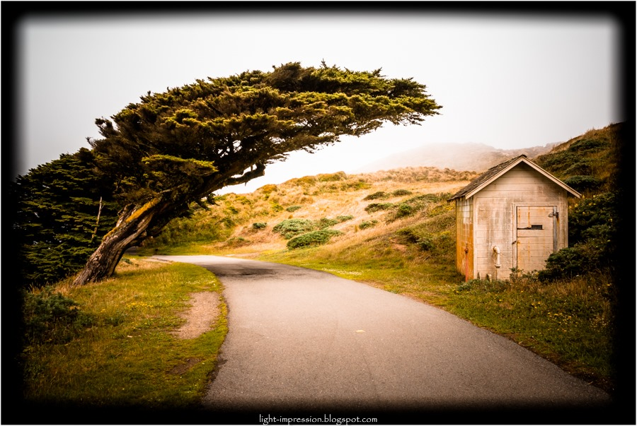 Light Impressions-Wind-swept Monterey Cypress-