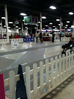 Some dogs don't like being in the ring, but I love all the attention!  It makes me very proud to be a Chow Chow and to live up to the legacy of my family!