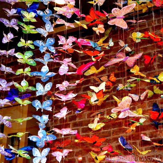 pearlbutterflies