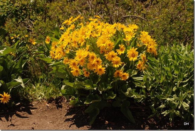 06-07-13 D Signal MT Overlook Tetons (28)