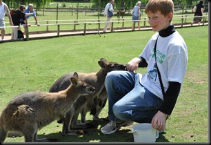 Lachlan with Wallabies DSC_0468