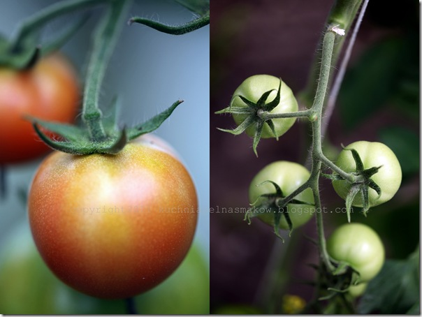 Zupa pomidorowa Billa Grangera3