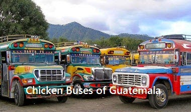 chicken-buses