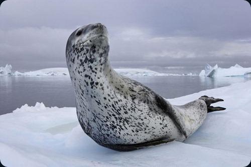 Polar Obsession20