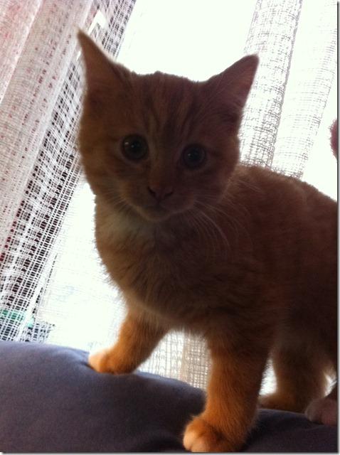2011_12 Garfield (5)