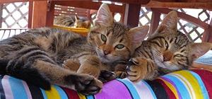 xmas_cat_1_02