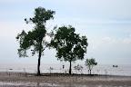 生长在海上的树