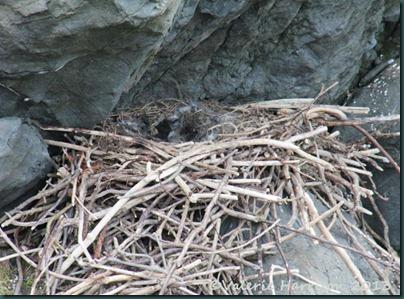 9-ravens-nest