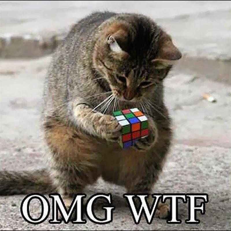 Ketika Kucing Bermain Rubik