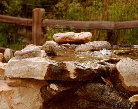 19. rock squirrel-kab