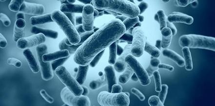 ciri - ciri bakteri