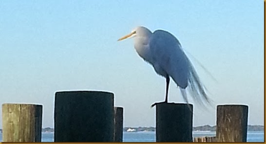 egret on post at dry dock restaurant