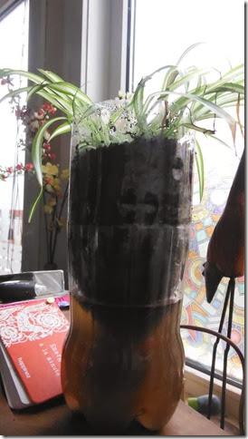DSCF1577 uit de  planten couveuse whoispieter