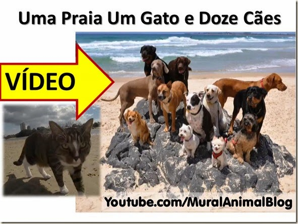 Uma Praia Um Gato e Doze Cães
