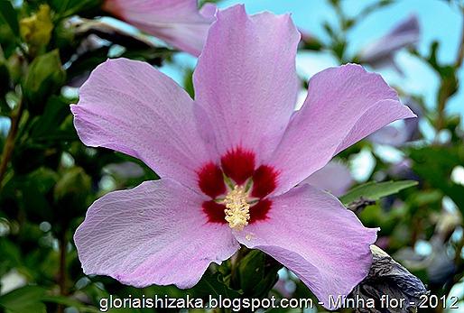 Glória Ishizaka - minhas flores - 2012 - 11
