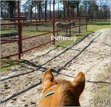 horseback ride 57