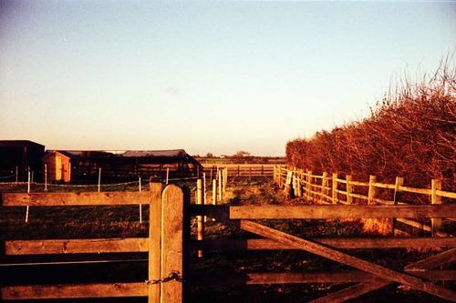 Horse-Land---XPRO
