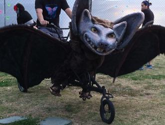 austin bike zoo (3)