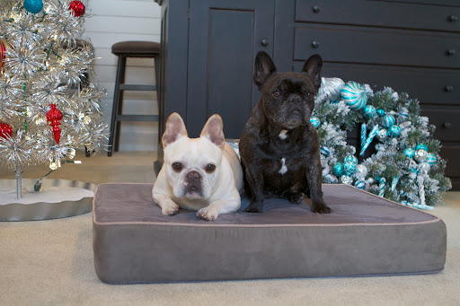 Maybe we should consider sleeping here and wait for Santa to arrive.  We hope Richard The Cat fared just as well with his holiday decorating.