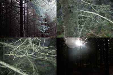 in_the_dark_forest_2