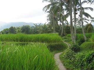Bali - May 2011