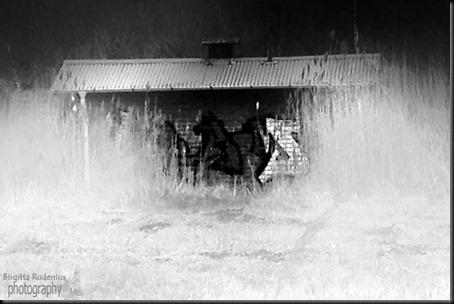 bw_20120429_graffiti