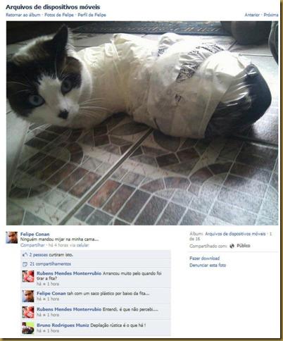 gato-torturado-face