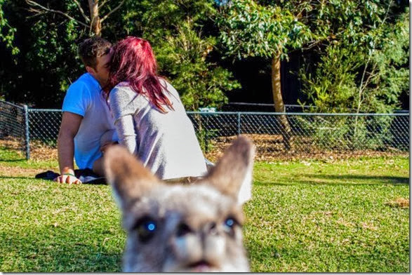 photobombs-funny-face-31