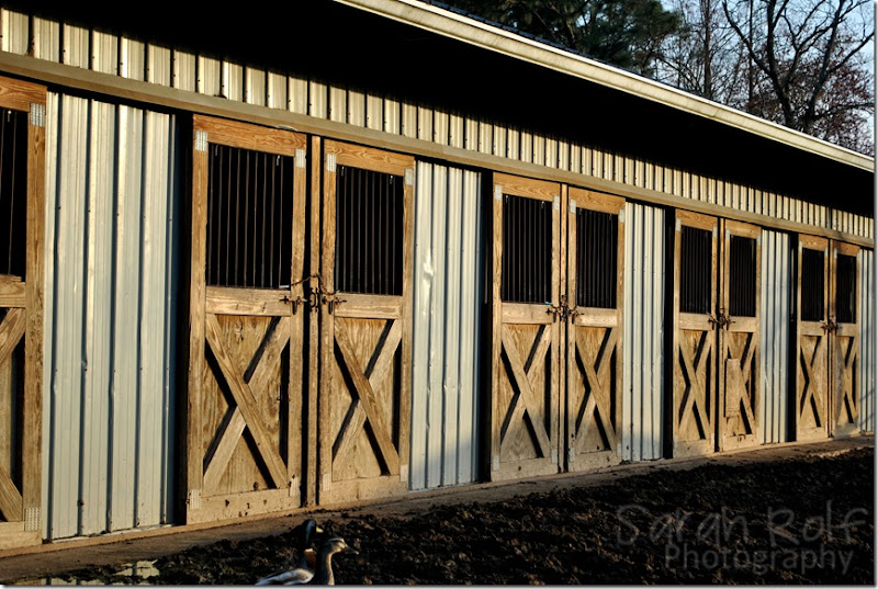 horse-stalls