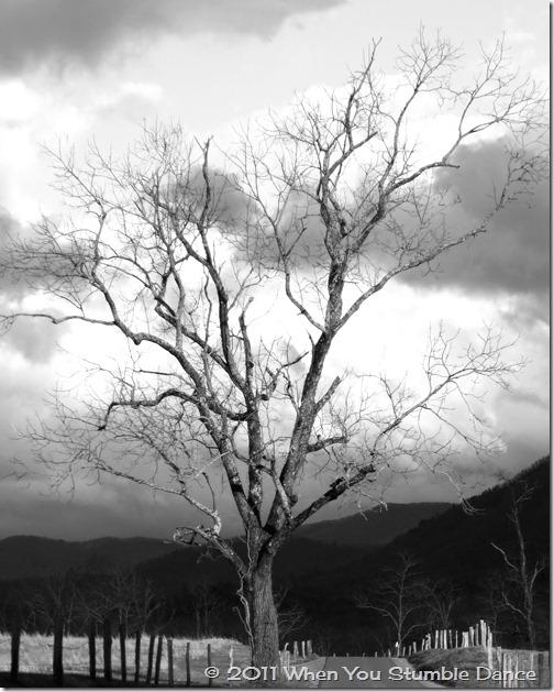 Tree 5 BW