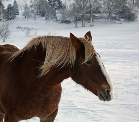 snow horses 040a