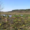 Бондарівське болото.JPG