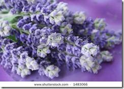 1_lavender62