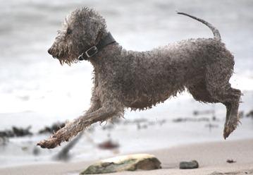 berwick dog1