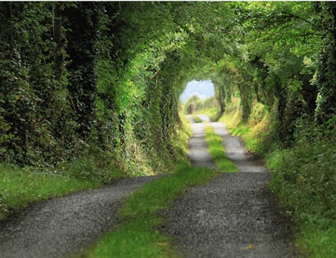 Green-Tunnel